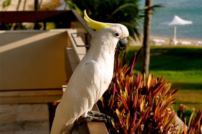 Остров Хейман, Австралия