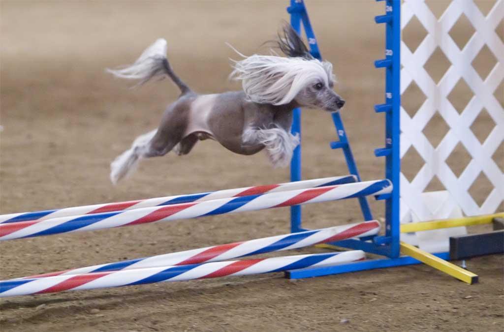 Аджилити - спорт для вас и вашей собаки